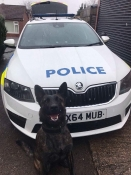 X9K9 Produced dog now working the streets